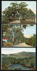 Selection of 12 different colour postcards showing views of Adelaide issued by the State Tourist Bureau and Intelligence Office Phone 2538 series. One with tear, otherwise in superb condition.