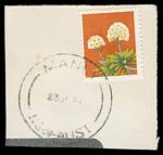 1975 18¢ Wildflower with Black colour omitted FU on piece, cancelled at Manly, NSW.